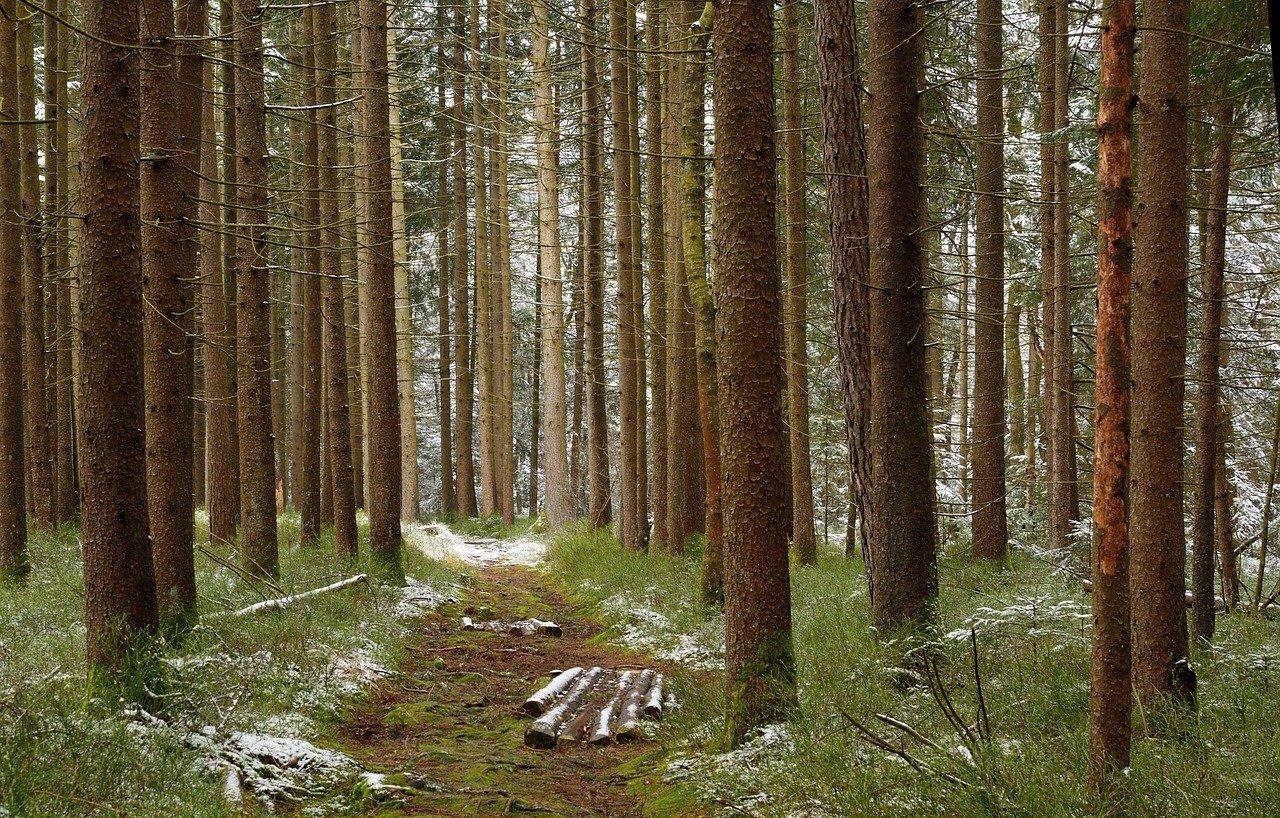 Online-Talk Wald